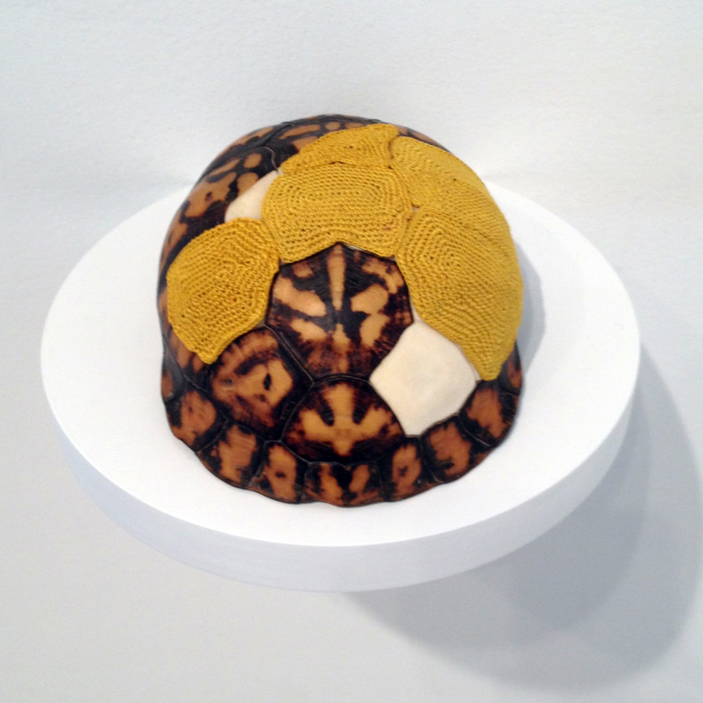 Esther Traugot: Turtleshell